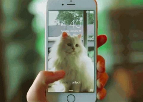 苹果推出新工具:Live Photos在网上分享更容易了