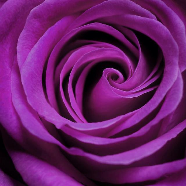 纯粹为了图标(8)—紫色