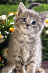 ,小猫,可爱,花儿,