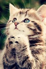 ,猫咪,可爱,小猫,动物,萌,许愿,