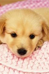 ,小狗壁纸,动物壁纸,