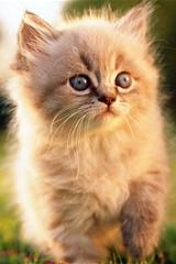 ,小猫,猫咪,可爱,动物,午后,阳光,草地,