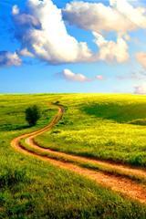 ,草原,天空,云,小道,