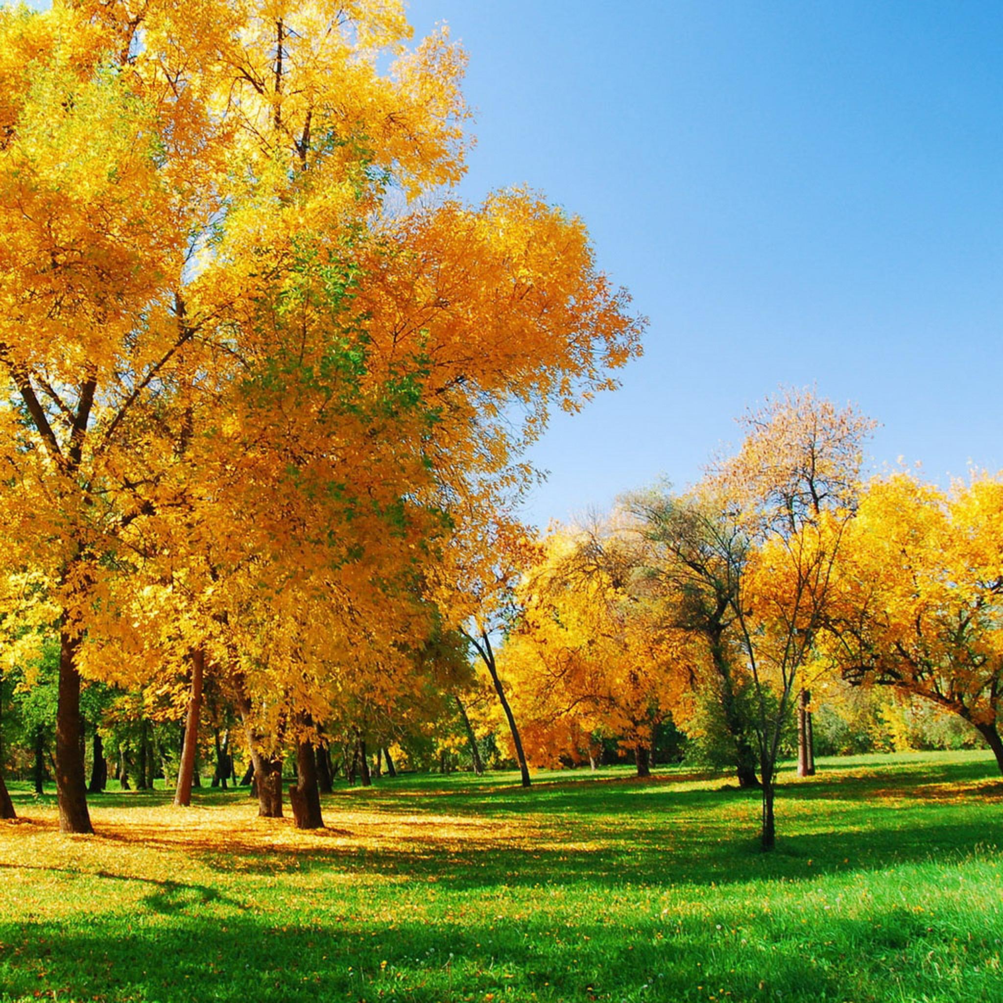 ,枫树,枫叶,秋天,落叶,萧瑟,风景,棕色,