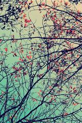 ,花,树枝,风景,绿色,