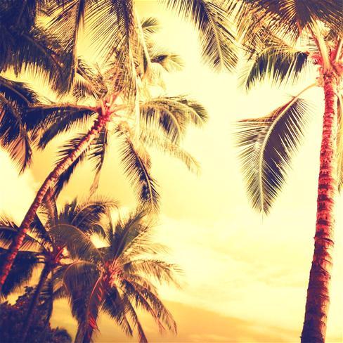 椰子树,树,夏天,热带,黄色