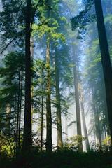 ,森林,树木,自然,风景,绿色,