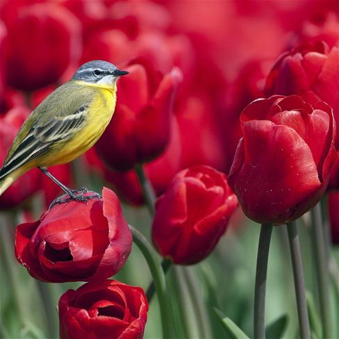 风景动物花图片