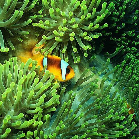 鱼,大海,海底世界,海草,珊瑚,风景,动物,植物,绿色