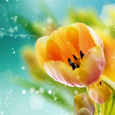 qq头像植物唯美花风景-qq头像花朵风景小清新/qq头像花草风景蓝色/小