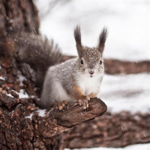 松鼠,花栗鼠,雪,冬天,可爱,萌,动物,彩色