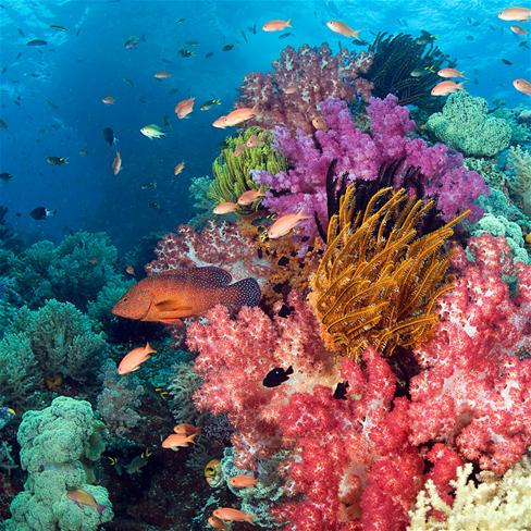 鱼,大海,海底世界,海草,珊瑚,唯美,风景,动物,彩色