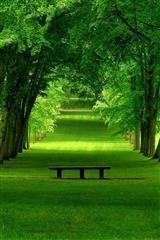 ,草地,树木,植物,