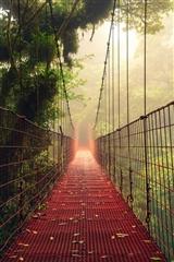 ,桥,风景,植物,